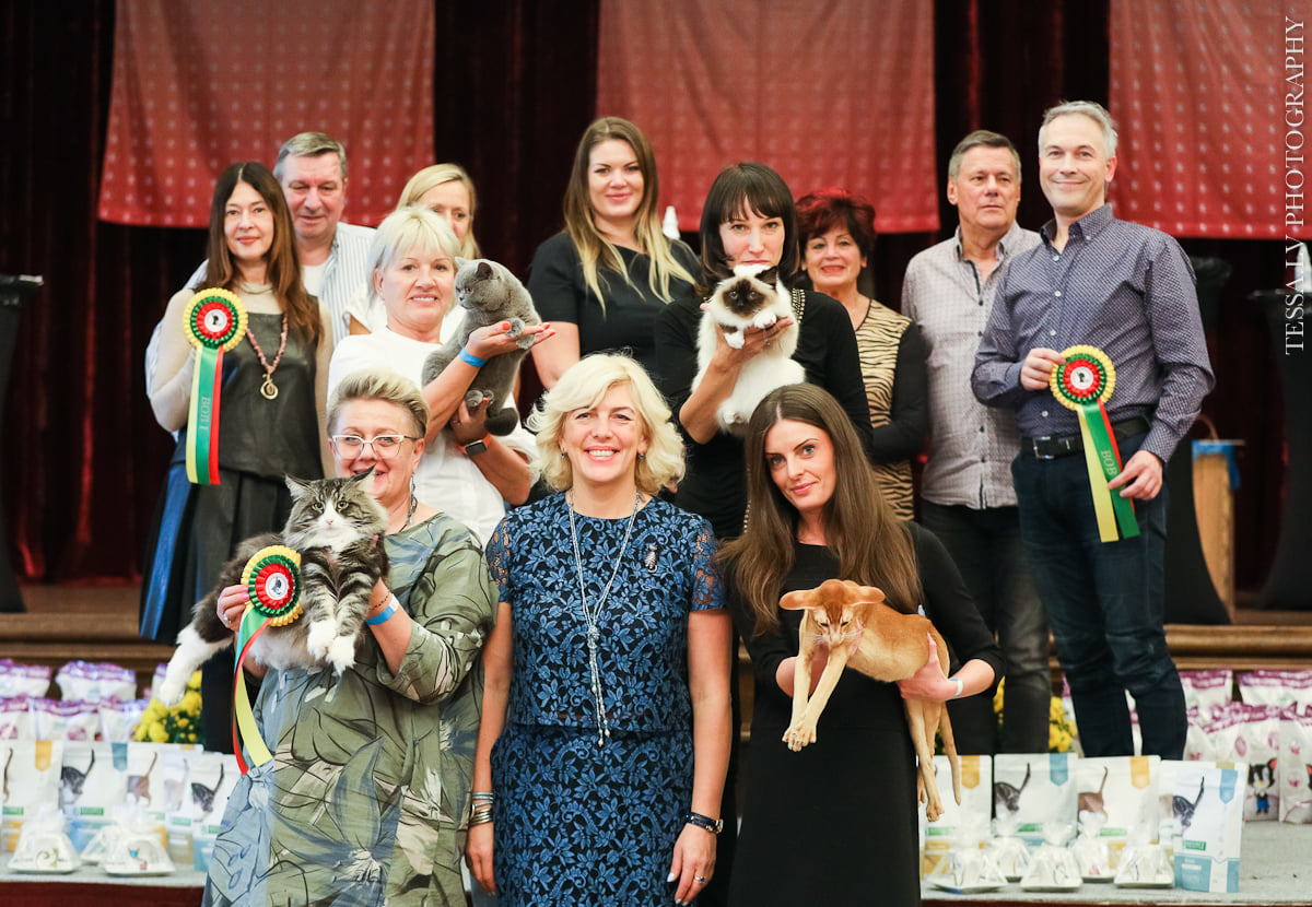 Международная юбилейная выставка кошек Vilnius, Lithuania, FIFe