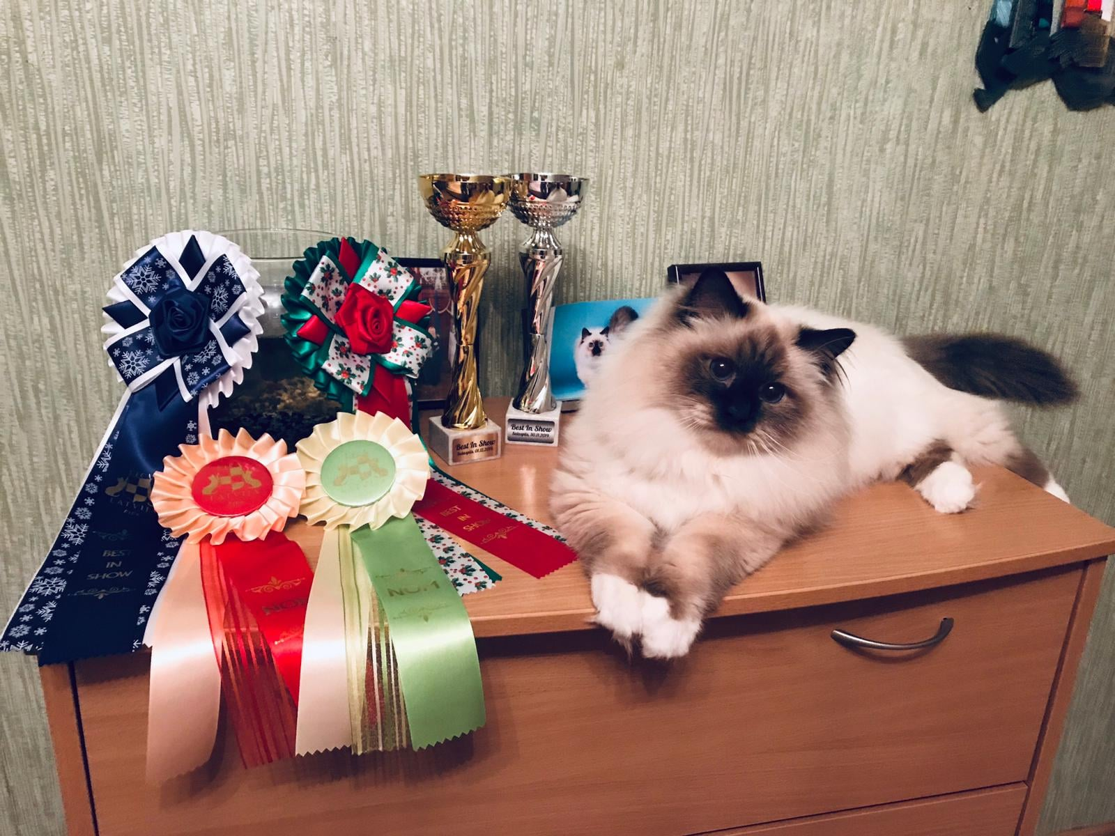 International Cat Show Salaspils, Latvia, FIFe, 30.11.-01.12.2019.